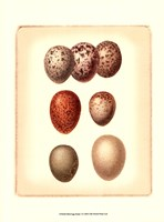 Bird Egg Study I Fine Art Print