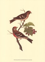 Antique Bird Pair II Fine Art Print