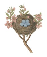 Antique Bird's Nest I Fine Art Print