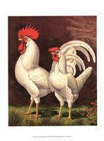 Cassell's Roosters VI Fine Art Print