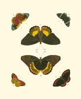 Butterfly Study I Fine Art Print