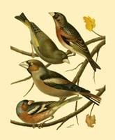 Domestic Bird Family II Fine Art Print