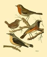Domestic Bird Family III Fine Art Print