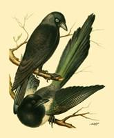 Domestic Bird Family V Fine Art Print