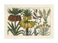 Botanical I Giclee