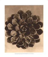 Sepia Botany Study II Framed Print