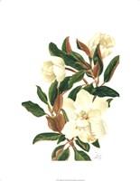 Magnolia II (Le) Giclee