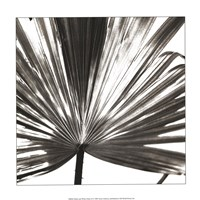 Black and White Palm III Giclee