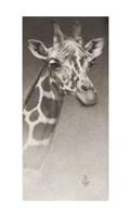 Jean, The Giraffe Giclee