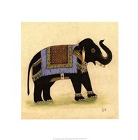 Elephant from India I Giclee