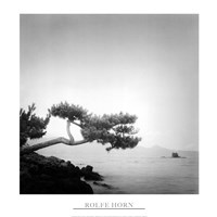 Two Branched Pine, Nakano Umi, Japan (24 x 24) Framed Print