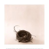 A la Curtis Framed Print