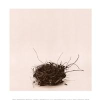 Leebas Nest Framed Print