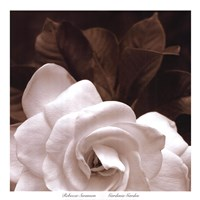 Gardenia Garden Framed Print