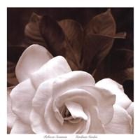 Gardenia Garden Fine Art Print