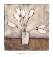 Tulipa Group I Fine Art Print