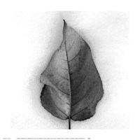 Aspen Leaf in Snow Fine Art Print