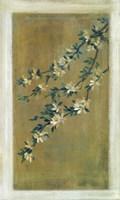 Plum Blossoms II Fine Art Print