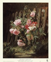 Pink Roses by a Garden Fence Fine Art Print