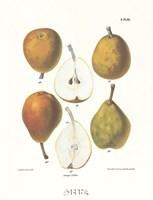 Pears IV Framed Print