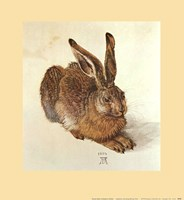 Young Hare Framed Print