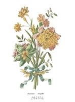 Anemones Jonquilles Fine Art Print