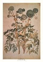 Angelica Arcangelica Framed Print