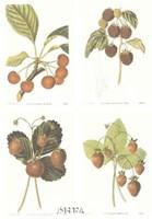 Berries (Set of Four) Fine Art Print
