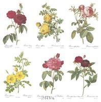 Roses (Set of Six) Fine Art Print
