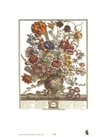 March/Twelve Months of Flowers, 1730 Fine Art Print