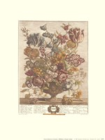 April/Twelve Months of Flowers, 1730 Framed Print