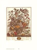 May/Twelve Months of Flowers, 1730 Framed Print