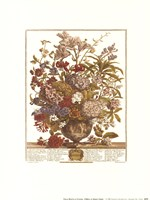 July/Twelve Months of Flowers, 1730 Fine Art Print