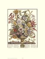 September/Twelve Months of Flowers, 1730 Framed Print