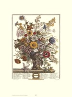 November/Twelve Months of Flowers, 1730 Framed Print