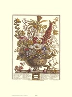 December/Twelve Months of Flowers, 1730 Fine Art Print
