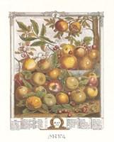 May/Twelve Months of Fruits, 1732 Fine Art Print
