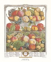 September/Twelve Months of Fruits, 1732 Framed Print