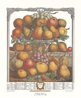 December/Twelve Months of Fruits, 1732 Framed Print