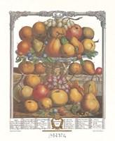 December/Twelve Months of Fruits, 1732 Framed Print