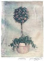 Pink Topiary Fine Art Print