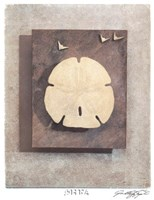 Seashell Study I Framed Print