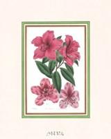 Azalea No. 1 Fine Art Print
