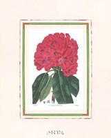 Rhododendron No. 1 Fine Art Print