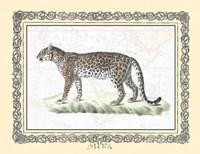 Leopard framed Framed Print