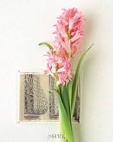 Hyacinth, Euro-Floral Framed Print