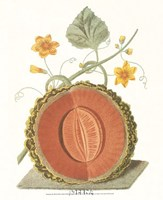 Melon - Cantalope Framed Print