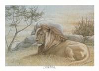 Golden Lion Fine Art Print