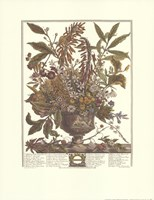 January/Twelve Months of Flowers, 1730 Fine Art Print