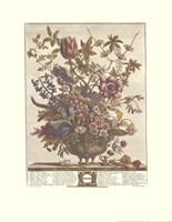February/Twelve Months of Flowers, 1730 Fine Art Print